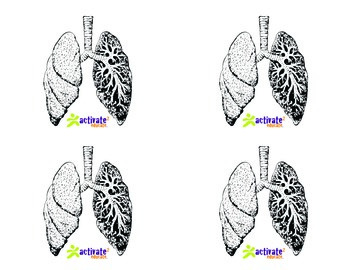 Teaching Respiratory System in P.E.: Respiratory System Image Cards