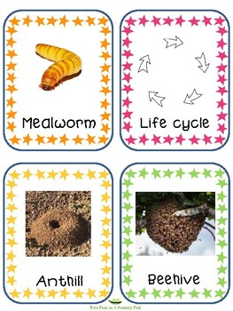Teaching Strategies Gold Insects Word Cards