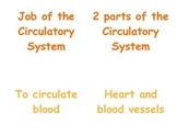 Circulatory & Respiratory System in P.E.: 2 - 3 Vocabulary Matching Cards