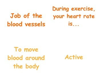 Circulatory & Respiratory System in P.E.: 2 - 3 Vocabulary Matching Cards
