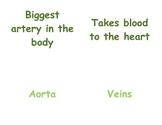 Circulatory & Respiratory System in P.E.: 4 - 5 Vocabulary Matching Cards
