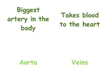 Circulatory & Respiratory System in P.E.: 4 - 5 Vocabulary Matching Cards