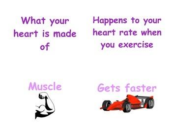 Circulatory & Respiratory System in P.E.: K - 1 Vocabulary Matching Cards