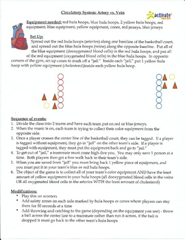 Teaching the Circulatory System in Physical Education: Art