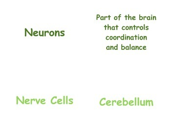Teaching the Nervous System in P.E.: 4th & 5th Grade Vocabulary Matching Cards
