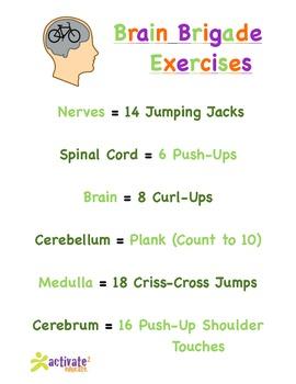 Nervous System in P.E.: Nervous System Brain Brigade Version 1 Exercise List