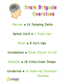Nervous System in P.E.: Nervous System Brain Brigade Version 1 Exercise List