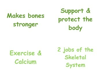 Teaching the Bones in P.E.: 4th & 5th Grade Skeletal Vocabulary Matching Cards