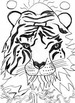 Tears of a Tiger Part 6 Chapters 26-34 Scavenger Hunt for