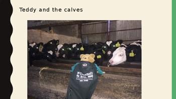 Teddy's Farm Adventure