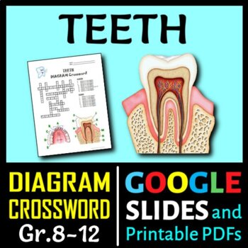 Teeth Crossword with Diagram {Editable}