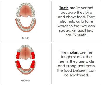 Teeth/Jaw Nomenclature Book