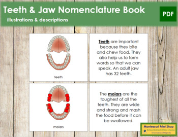 Teeth & Jaw Nomenclature Book