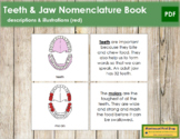 Teeth & Jaw Nomenclature Book (Red)