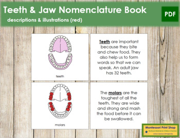 Teeth/Jaw Nomenclature Book (Red)