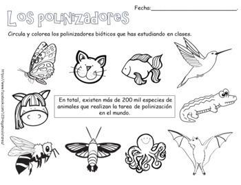 Tema: Los polinizadores