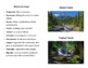 Temperate Deciduous Forest Exploratory Guide and Student Reference Manual