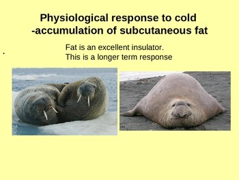 Temperature regulation in mammals