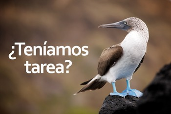 ¿Teníamos Tarea? Blue Footed Booby Poster: Digital Download