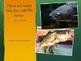 Tennessee Animal Habitats PPT