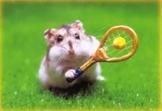 Tennis Circuits