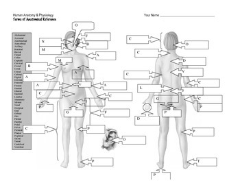 Terms of Anatomical Reference