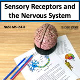 Sensory Receptors and The Nervous System Printable NGSS MS-LS1-8