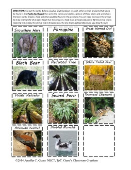 Terrestrial Ecosystems Food Webs
