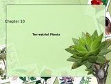 Terrestrial plants: Mosses, ferns seed plants and flowers