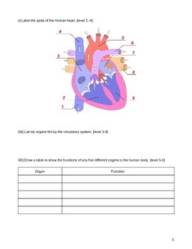 Test- Cells and organ systems