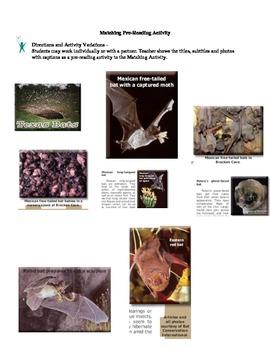 Texas Bats - Expository Text - Main Idea Activites
