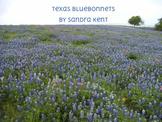 Texas Bluebonnets Ebook
