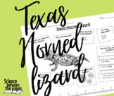 Texas Horned Lizard Facts Handout