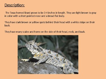 Texas Horned Lizard - power point information facts review pictures