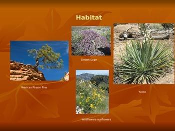 Texas Mountain Habitat Editable