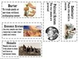 Texas Native Americans Vocab Cards