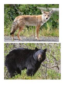 Texas Native Animals Dichotomous Key