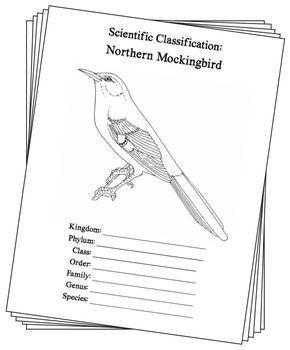 Texas State Bird Notebooking Set Northern Mockingbird