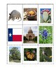 Texas State Symbols Matching Activity