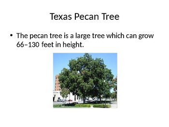 Texas State Tree