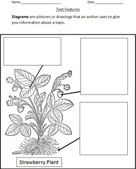 Informational Text Features: Diagrams