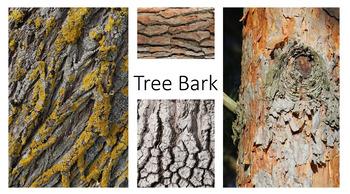 Textures Photo Bank - Art & Photography