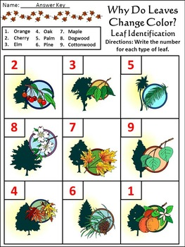 Thanksgiving Activities: Why Do Leaves Change Color in the Fall Activity Packet