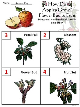 Fall Activities: How Do Apples Grow Science Activity Packet - Color Version