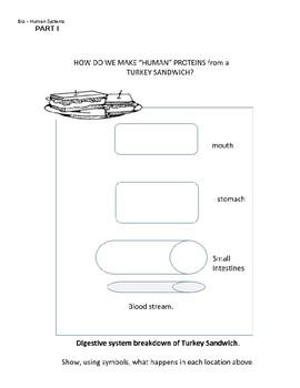 Thanksgiving Biochemistry STEAM drawing