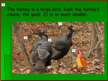 Thanksgiving: Learn All About Turkeys Power Point