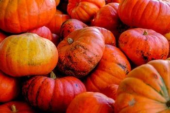 Thanksgiving/Pilgrims Unit Study