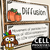 Thanksgiving Science Activity for Cell Processes