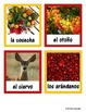 Thanksgiving - Spanish text, questions, flashcards