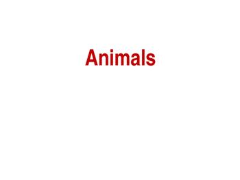 The 5 Kingdoms: Vertebrate Animals -Mammals